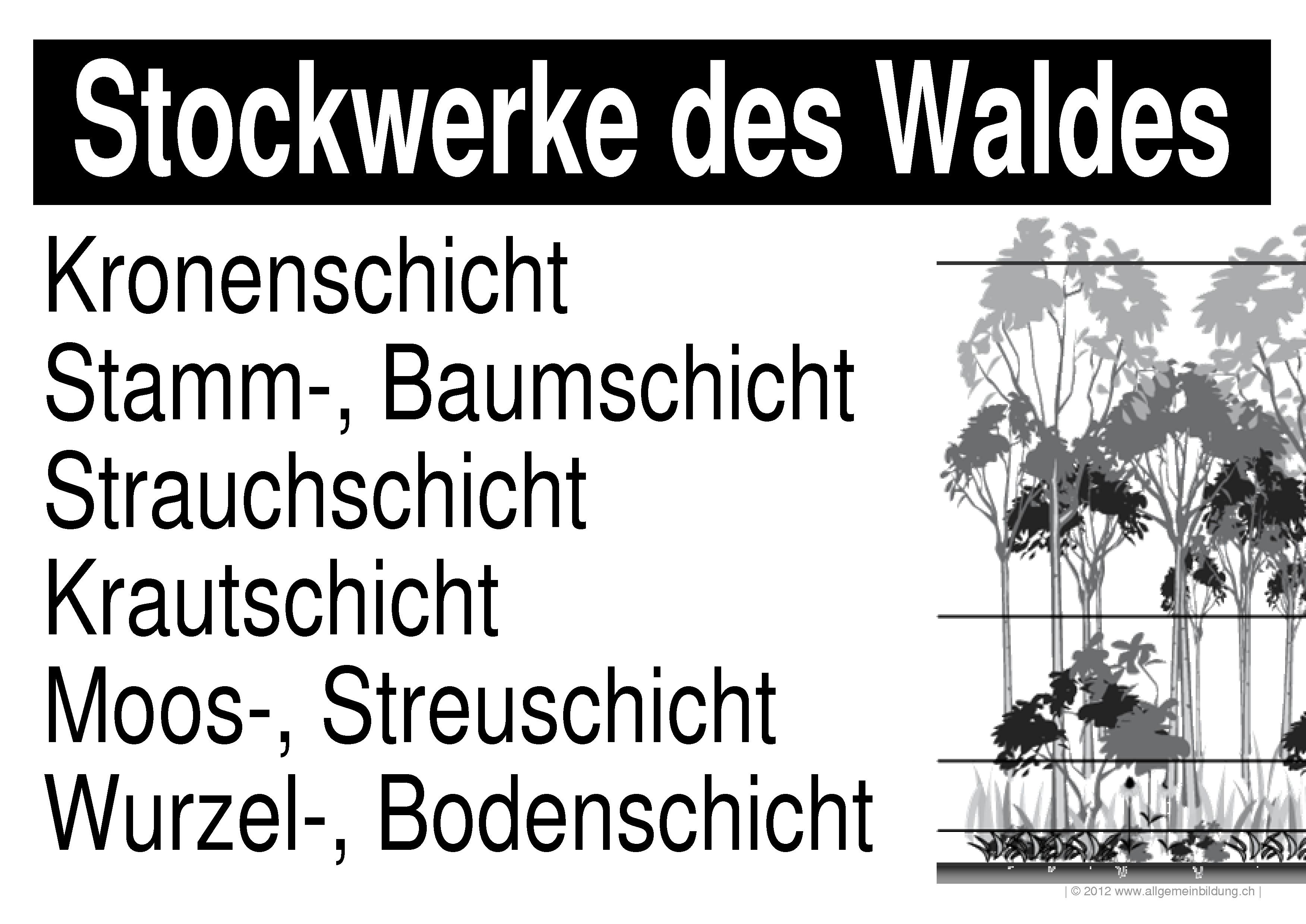 Biologie Lernplakate Wissensposter Stockwerke Des Waldes
