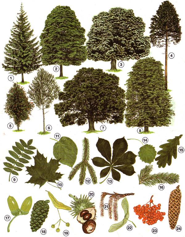 Und bäumen blätter früchte von Yecai bolu